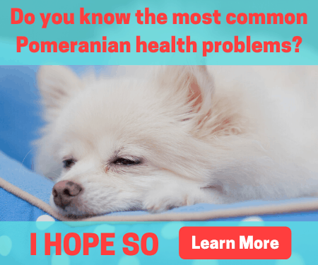 Common Pomeranian health problems