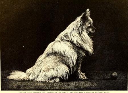 Pomeranian historic
