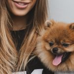 Do Pomeranians Love Their Owners? (Spoilers: Yes!)