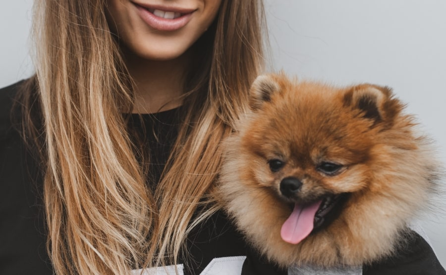 Pomeranian being held by woman